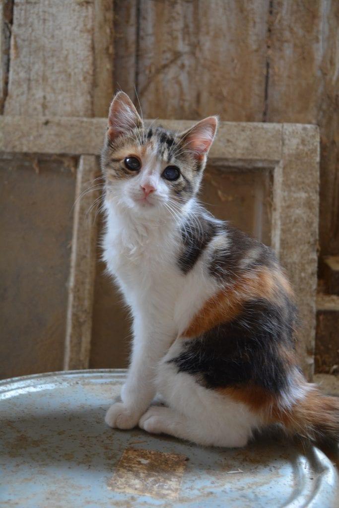 jm-farm-cat